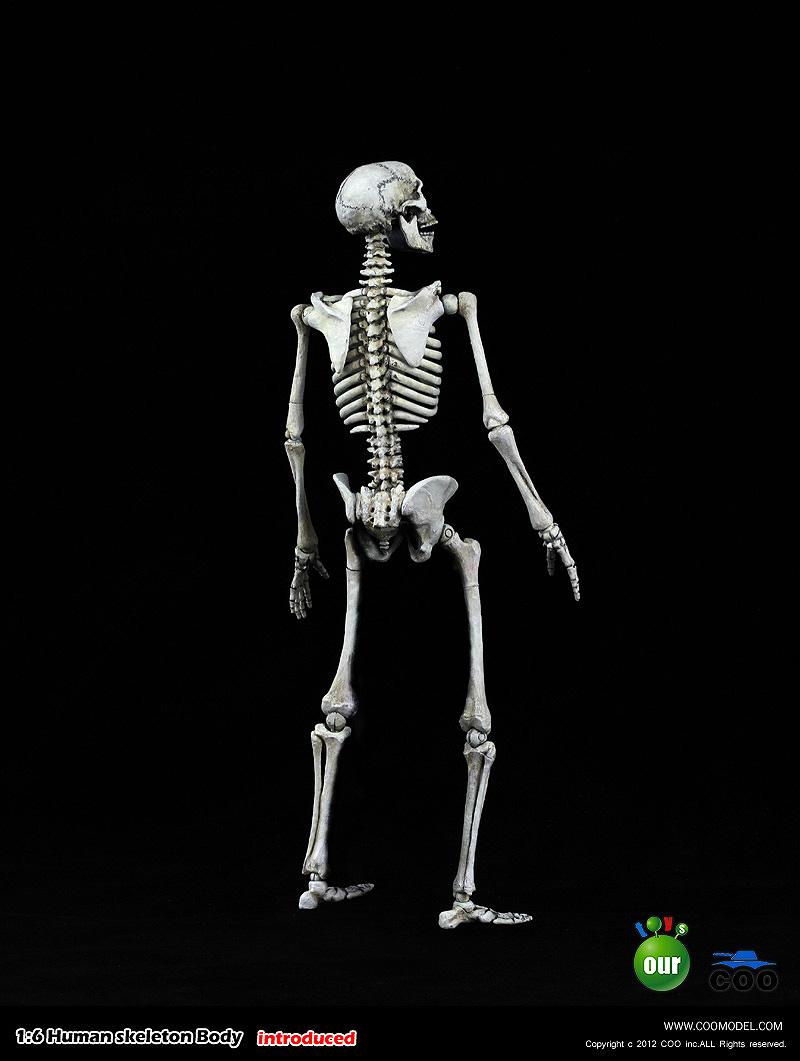 COO MODEL - 1:6 HUMAN SKELETON BODY 2200273rttf2o39z3i03f3