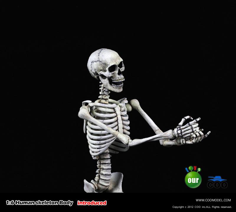 COO MODEL - 1:6 HUMAN SKELETON BODY 220031e42if0v9qif9zj00