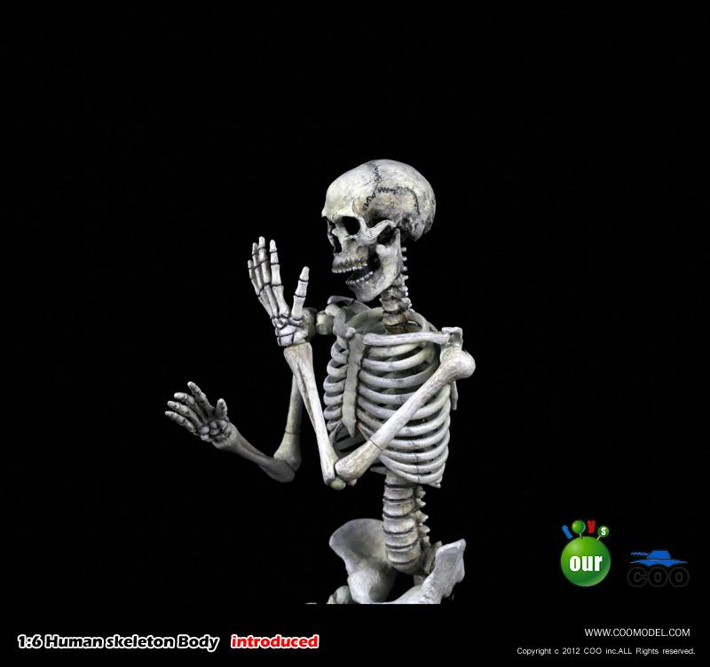 COO MODEL - 1:6 HUMAN SKELETON BODY 220037t85n4rnt2440uuld
